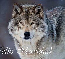 Timber Wolf Christmas Card - Spanish - 20 by WolvesOnly