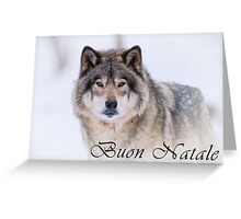 Timber Wolf Christmas Card - Italian - 21 Greeting Card