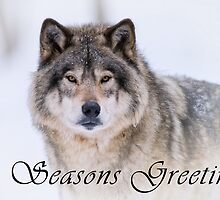 Timber Wolf Seasons Card - 21 by WolvesOnly