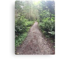 Forest Hiking Path Canvas Print
