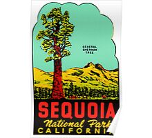 Sequoia National Park California Vintage Travel Decal Poster