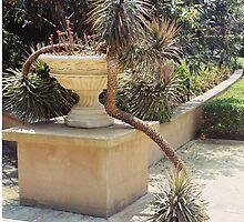 wandering plant by adam pearson