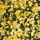 Ginkgo Leaves I by Rupert Russell