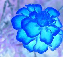 """The Blues"" by Gail Jones"