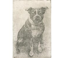 Henry the Boston terrier  Photographic Print