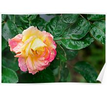 Fading autumn rose Poster