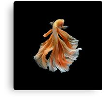 Beautiful Siamese Fighting Fish Canvas Print