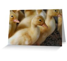 Pack of Quackers Greeting Card
