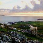 Sheep on Dun I by TJLewisPhoto