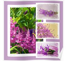 Photo Collage # 2 - Astilbe Etc Poster