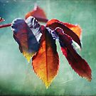 Autumn Glow by Astrid Ewing Photography