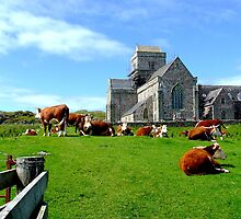 Iona Abbey, with cows by TJLewisPhoto