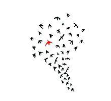 Unique bird Photographic Print