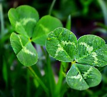 The Luck of the Clover by Scott Mitchell