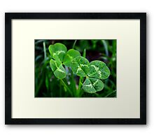 The Luck of the Clover Framed Print