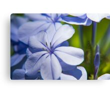 Beautiful garden flowers Canvas Print