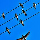 Birds by NaturesEarth