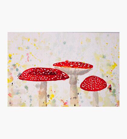 Toadstool Mushrooms Photographic Print