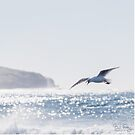 SEAGULL-FLIGHT-7968 by Paul Foley