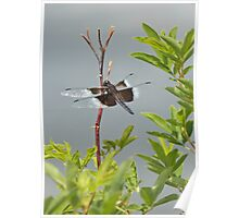 Panthorn Perch Poster