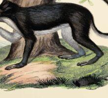 Die Säugthiere in Abbildungen nach der Natur mit Beschreibungen Johann Christian Daniel Schreber 1855 221 Sticker