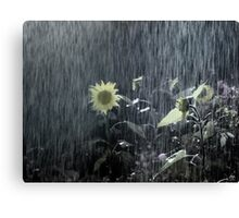 Painted Sunflower in the Rain Canvas Print