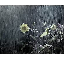Painted Sunflower in the Rain Photographic Print