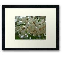 White flowers Framed Print