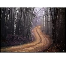 Road into the Mist Photographic Print
