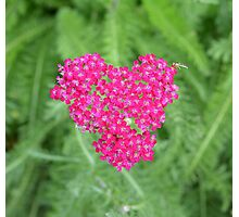 Heart full of flowers Photographic Print