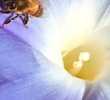Morning Glory and Bee Sticker