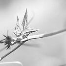 Razor wire by Paul Pasco
