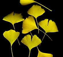 Golden Ginko Leaves by Barbara Wyeth