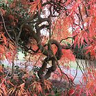 Autumn colour in the gardens by tomylees