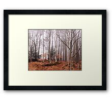 Foggy Forest Framed Print