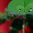 Raindrop Macro by Gabrielle  Lees