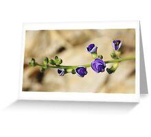 Purple Bloom - African Wild Flowers Greeting Card