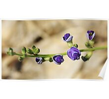 Purple Bloom - African Wild Flowers Poster