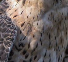Portrait of a hybrid falcon Sticker