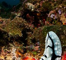 Nudibranch off Onemobaa Island, Wakatobi National Park, Indonesia by Erik Schlogl