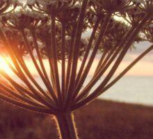 Treyarnon Sunset Flower Sticker