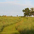 Trail Through Prairie Grasses by Ben Waggoner