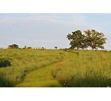 Trail Through Prairie Grasses Photographic Print