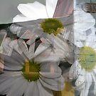 Bakewell Street by Lozzar Flowers & Art