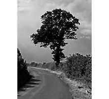 Black Tree Photographic Print
