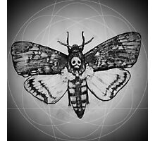 Death's Head Moth  Photographic Print