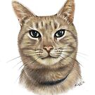 Colour Pencil Portrait of Opal the Cat by Karen Sagovac