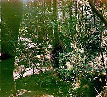 Aokigahara (Suicide Forest) by Jenn Winterbine