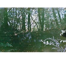 Sea of Trees Photographic Print