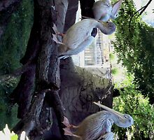 Pelicans by jhell2